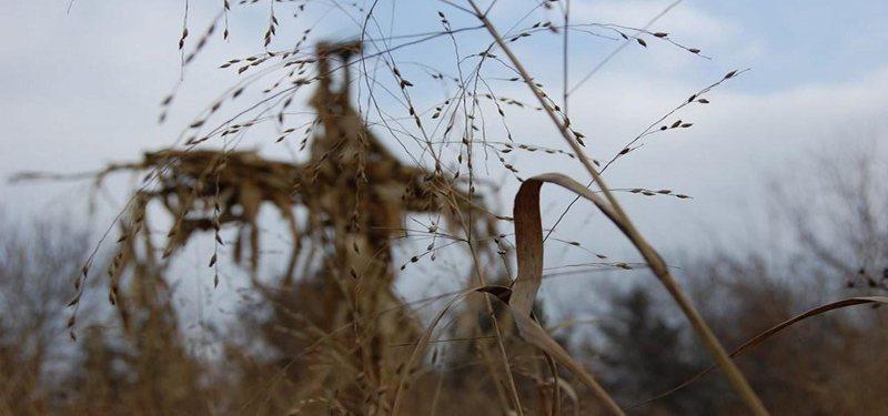 Los chicos del maíz 4: Reunión